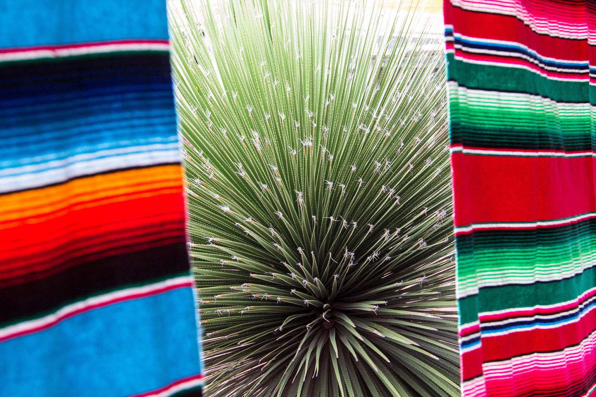 Artesanato têxtil e o cacto chamado agave, de onde são retiradas fibras, além de ser produzida a tequila e o mezcal